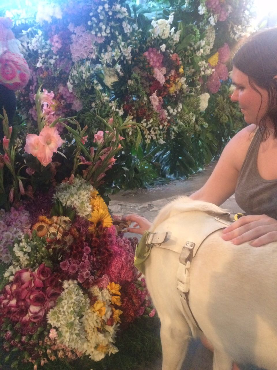Me touching a silleta with Isla. There is a wall of flowers in the background.